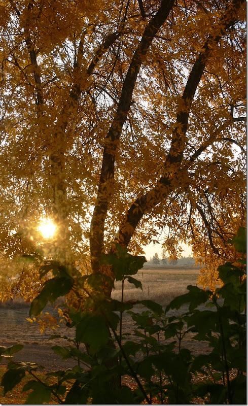 fall 010