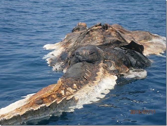 extraña criatura golfo persico 2