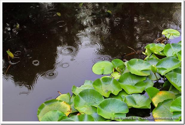 150628_Vandusen_raindrops