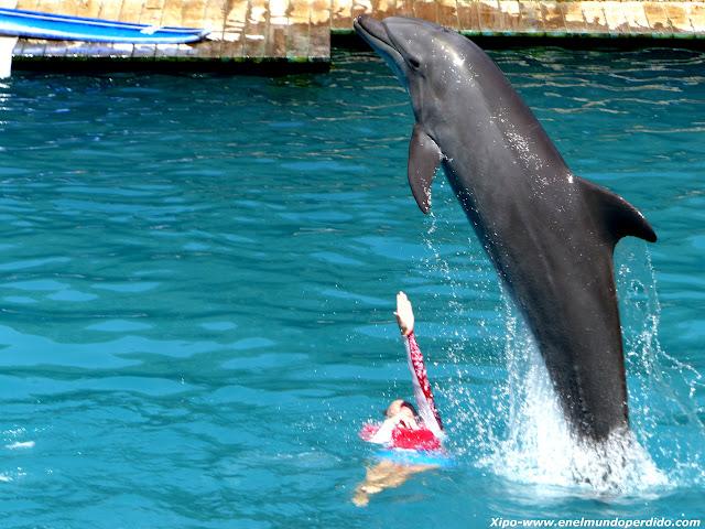 delfines-miami.JPG