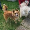 Brownie, Bina & Amber März 11-2.jpg