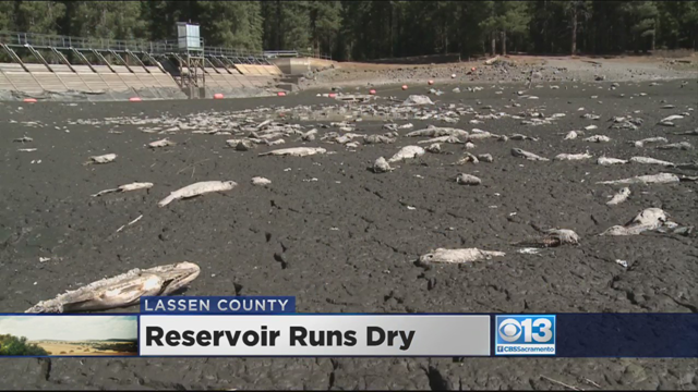 Fish lay dead at the bottom of Mountain Meadows reservoir, which is also known as Walker Lake, a popular fishing hole just west of Susanville, Northern California. The reservoir ran dry overnight, killing thousands of fish and leaving residents looking for answers. Photo: CBS13