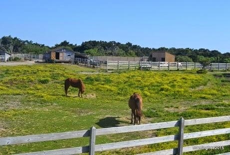 Pony Pasture