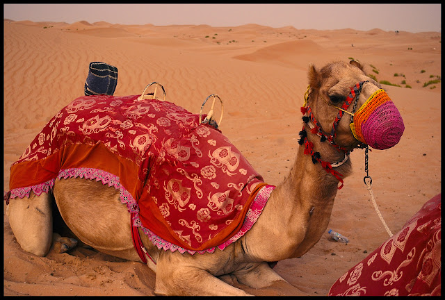 desert safari arabian nights village UAE servicefromheart