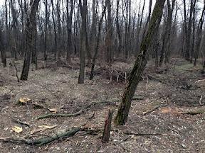 лес11.jpg