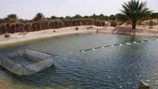 Le rôle de la femme rurale dans la promotion de la pisciculture saharienne mis en exergue à In-Salah