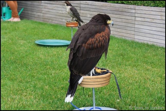 Falcon - Nomura Gardens