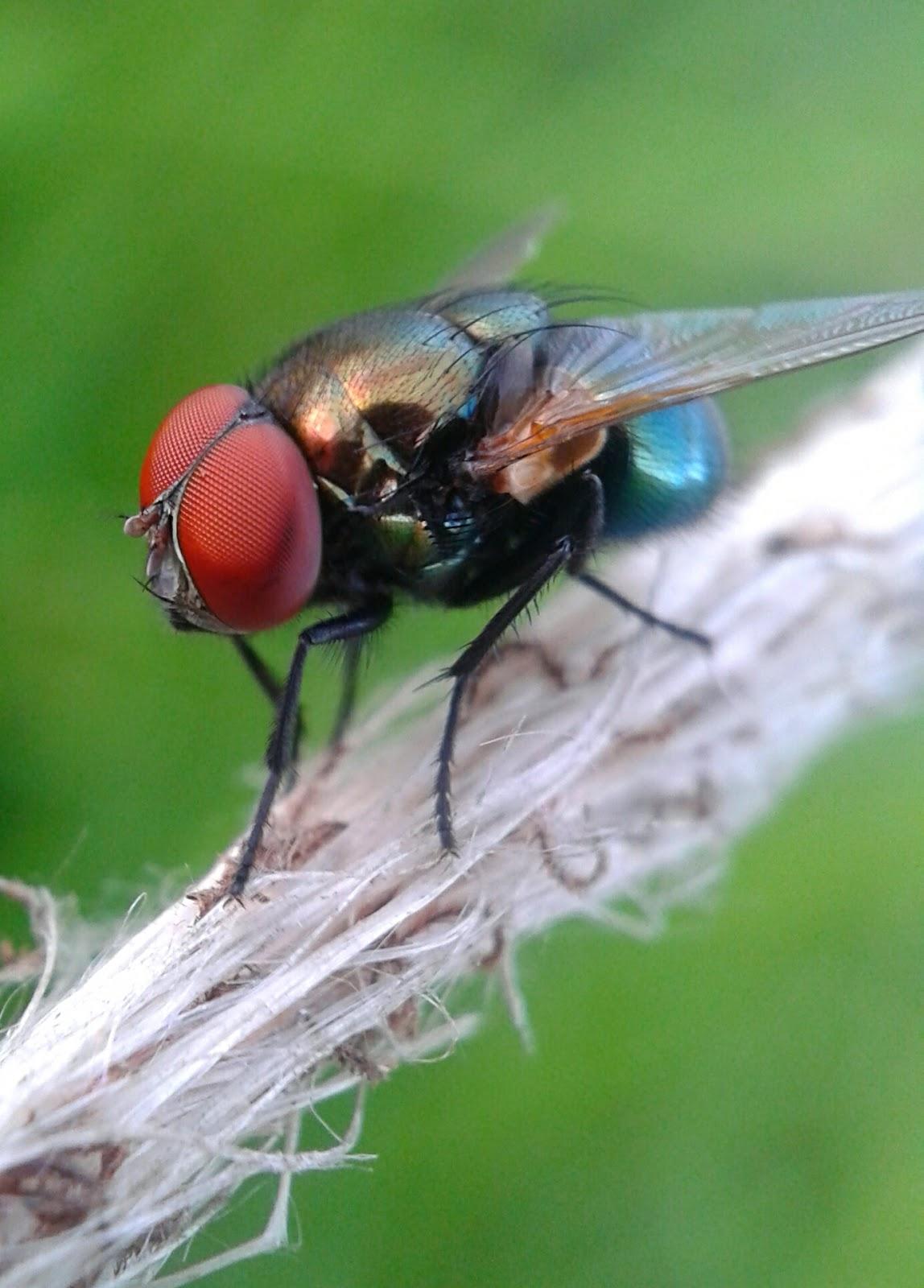 Macro Insect Phonegraphy Lensbong Lensa Bongkaran Makro Hp Dengan Bantuan Atu Bongkarankita Bisa Memanfaatkan Camera Smarthone Kita Untuk Mengambil Objek