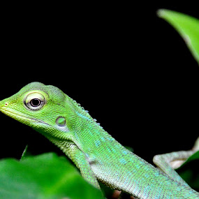 Little Lizard by Kwok Sioe Djoen - Animals Reptiles ( lizard, leave, green )