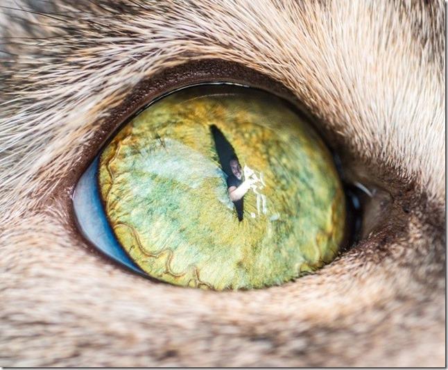 Cats Eyes13