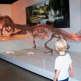 Houston Museum of Natural Science - 116_2705.JPG
