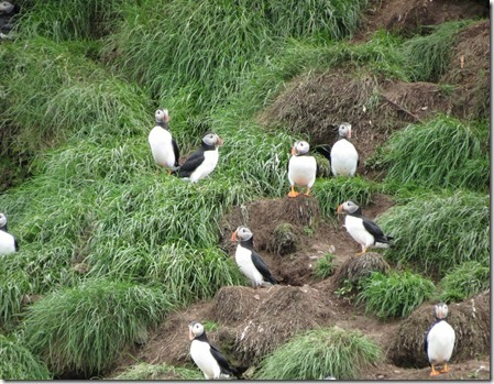 nl_be_mb_puffins6_thumb1