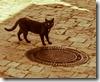 Katze-0221