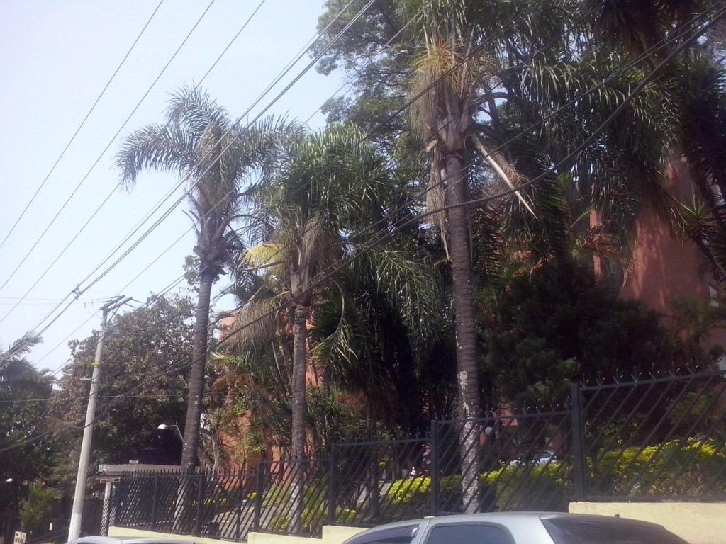 Apto 2 Dorm, Jardim Paraventi, Guarulhos (AP3576) - Foto 7