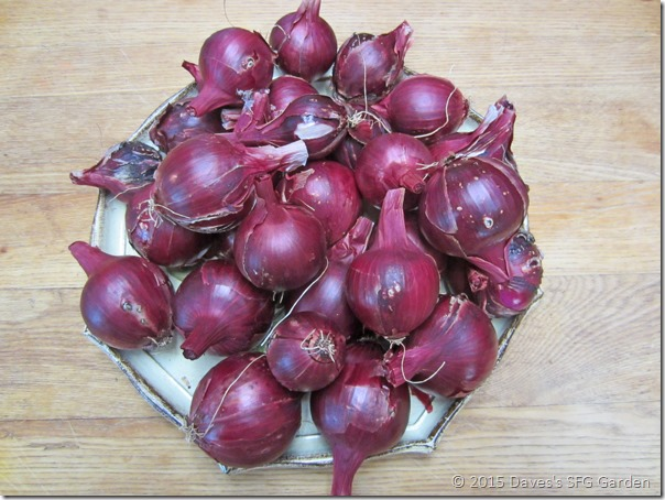 Red_Zeppelin_onions