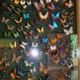 Houston Museum of Natural Science - 116_2860.JPG