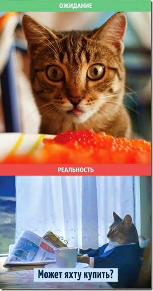 cats-expectations-reality-006