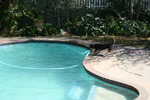 Chuy attacks the Kreepy Krauly pool cleaning machine.