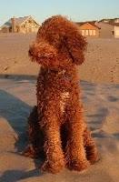 Sire Balu at the beach
