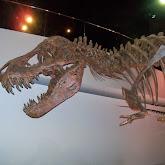 Houston Museum of Natural Science - 116_2685.JPG