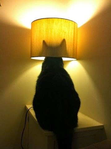 I have that exact same lamp