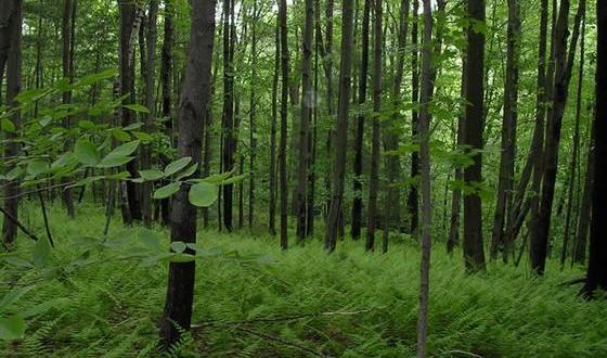 Hutan di Amerika