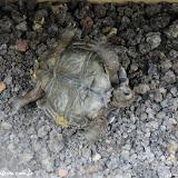 Oops, esta se virou e tá difícil voltar ( o funcionário teve que ajudar) - San Cristóbal, Galápagos