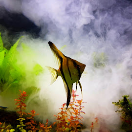 Fish in the fog....  by Ana Wisniewska - Instagram & Mobile Android