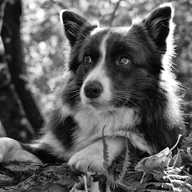 Emy by Bojan Kolman - Black & White Animals