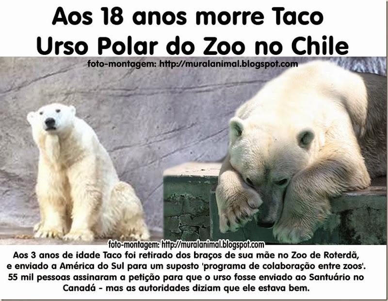 taco_urso_polar