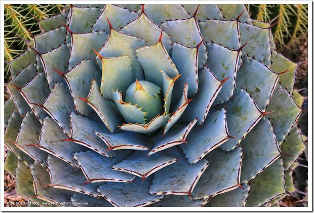 150926_SucculentExtravaganza_088