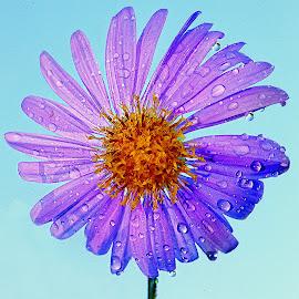 Ventilateur by Gérard CHATENET - Flowers Single Flower