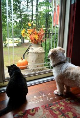 fall front door pets