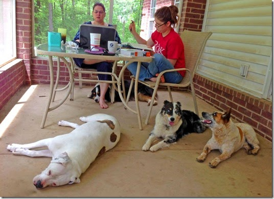 on the porch with dogs