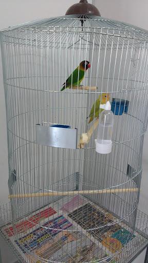 Sammy Pet Shop, R. Célio Veiga, 410 - Jardim Cidade de Florianopolis, São José - SC, 88111-100, Brasil, Loja_de_animais, estado Santa Catarina
