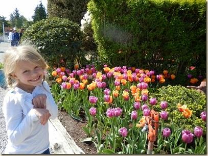 4-17 Tulips 08