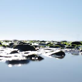 Beach Pebbles by Corinna Tannian - Nature Up Close Rock & Stone ( sea, ocean, pebbles, beach, photography )