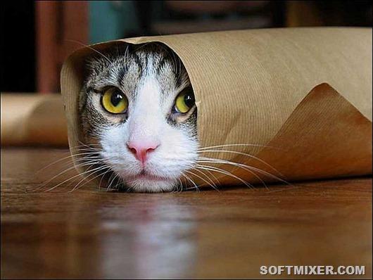 divertido-gato