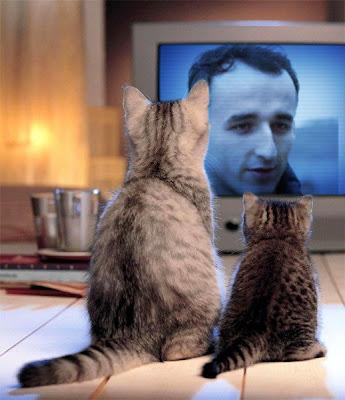 котята скучают по Роберте Кубице в сезоне 2011