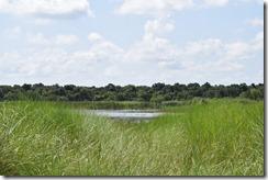 Lake beyond grass 2
