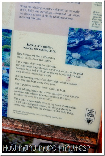 Walk to Grass Point, Bruny Island, TAS ~ How Many More Minutes?