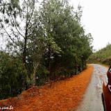 Podocarpus do Parque Podocarpus - Vilcabamba, Equador