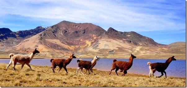 Comunidad de Alto Milluni (El Alto)