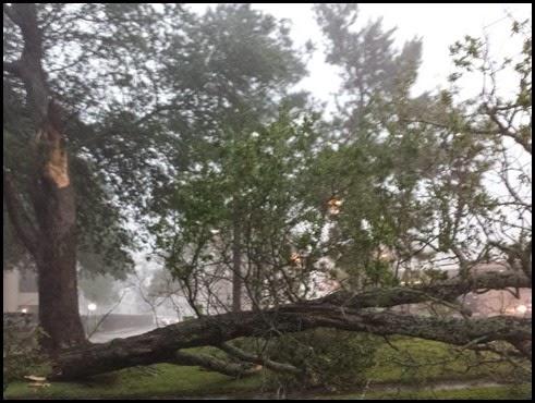 tree down