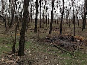 лес20.jpg