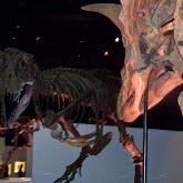 Houston Museum of Natural Science - 116_2683.JPG