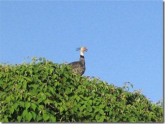 passo-do-lontra-pesca-ave