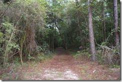 Trail view through trees-2