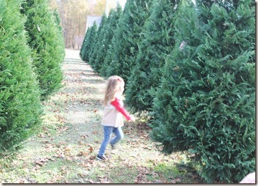 Zoey running through the Christmas trees8