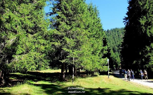 Bucegi-Valea-Horoabei-16w.jpg